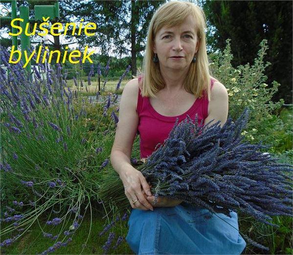 Sušenie byliniek